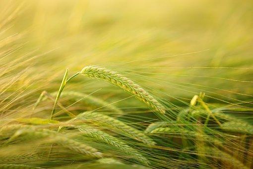 najlepsze biostymulatory w rolnictwie