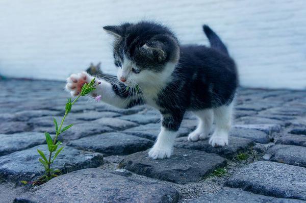 okresowe szczepienie kota