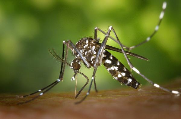 świeca na komary